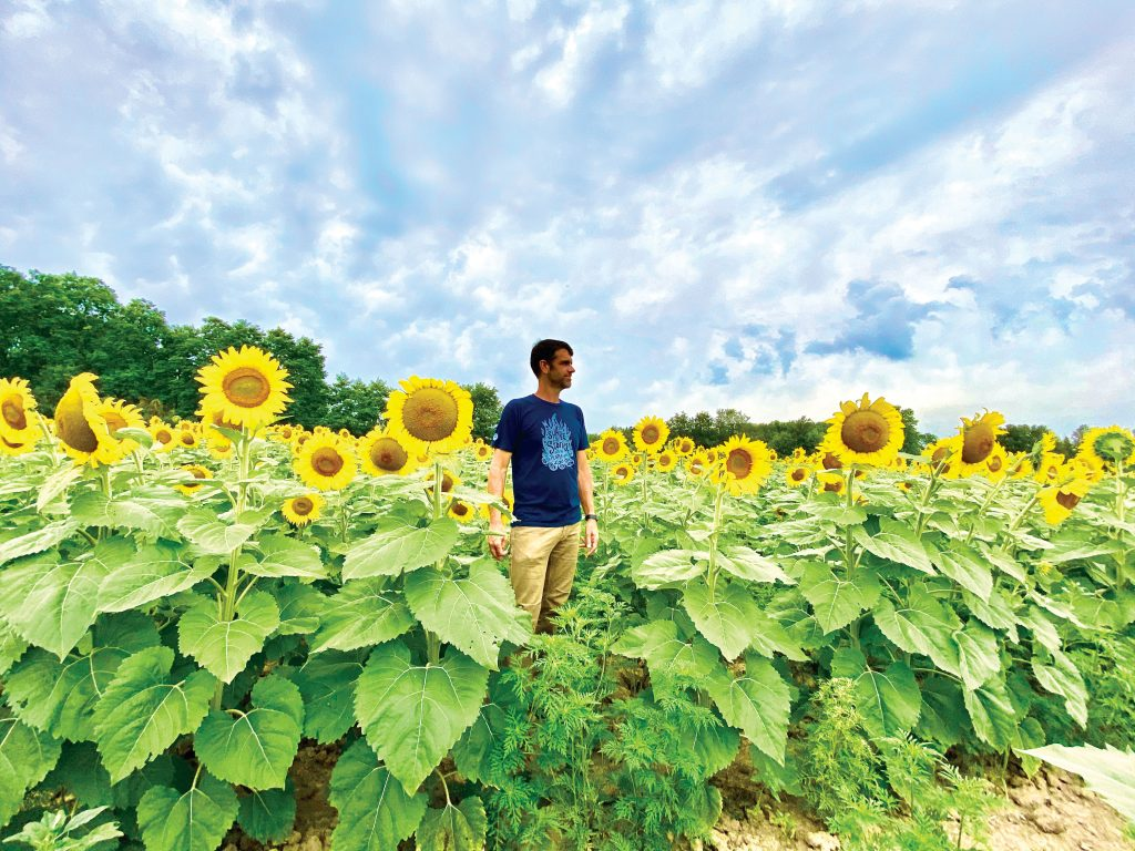Wild_Routed_Sunflowers